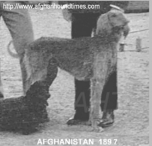 http://www.afghanhoundtimes.com PHOTO Afghan hound in Afghanistan 1897