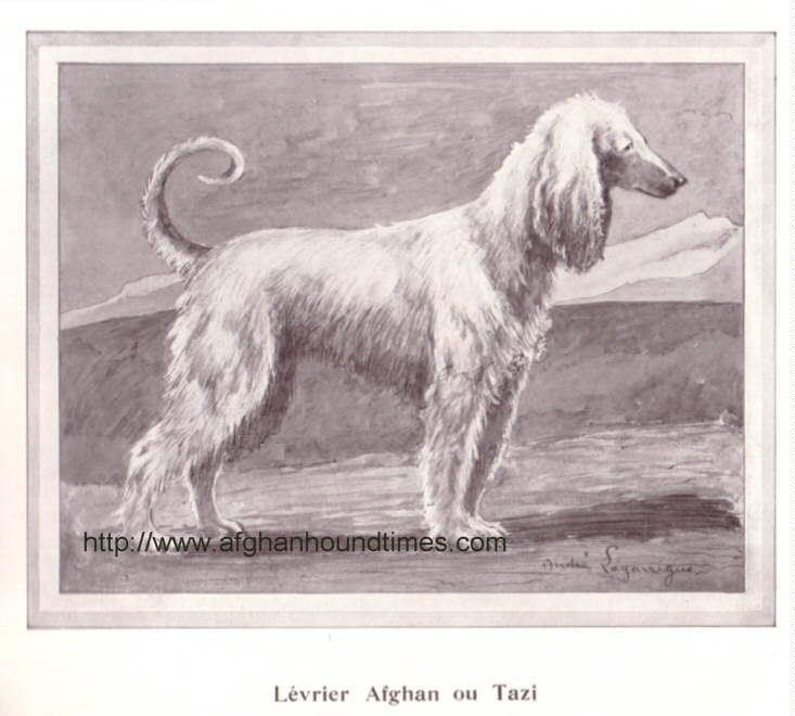 Andre Lagarrigue Afghan Hound Watercolour 1934