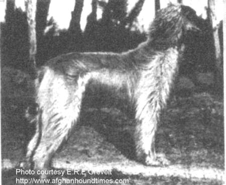Afghan Hound Times - Barukhzy's Khan (to Vdom)