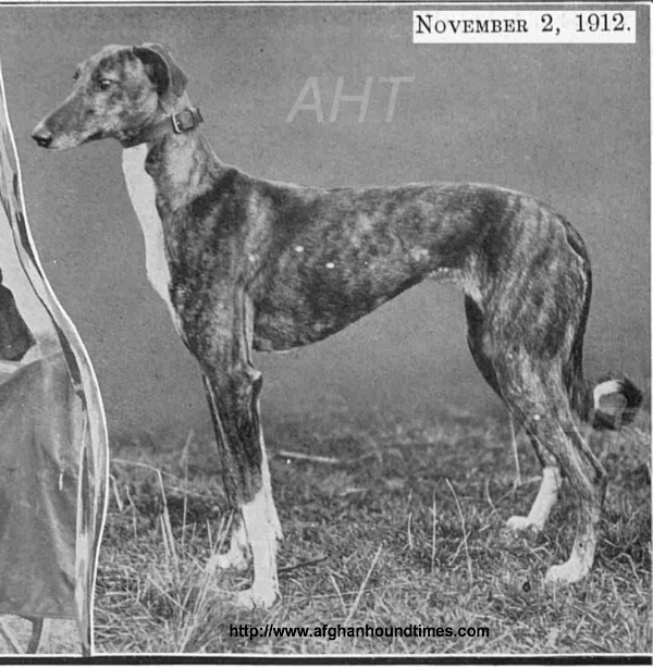 http://www.afghanhoundtimes.com PHOTO Afghan hound offsprint BAZ  registered in Greyhound stud book c1912