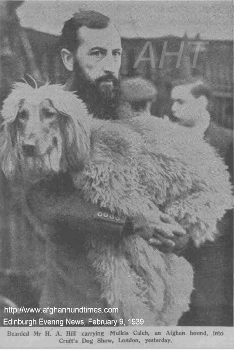 http://www.afghanhoundtimes.com PHOTO Mr Hill with Brantwood Muklis Caleb at Crufts 1939