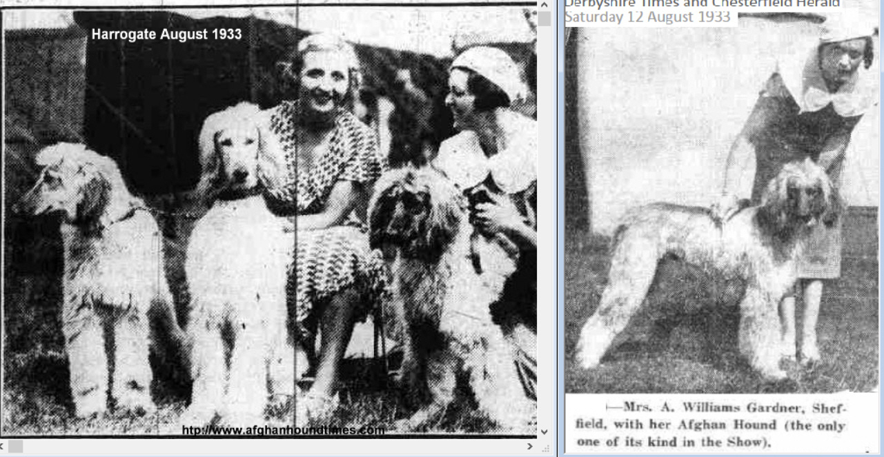 http://www.afghanhoundtimes.com Photo Edna Carlton and Mrs Williams Gardner 1933