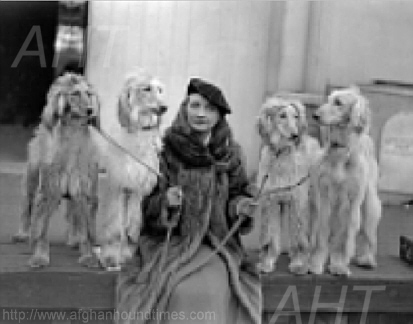 http://www.afghanhoundtimes.com PHOTO Edna Carlton and Hounds, Crystal Palace 1933