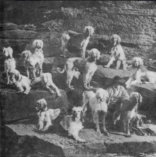 http://www.afghanhoundtimes.comBell Murray Afghan Hounds at Cove house
