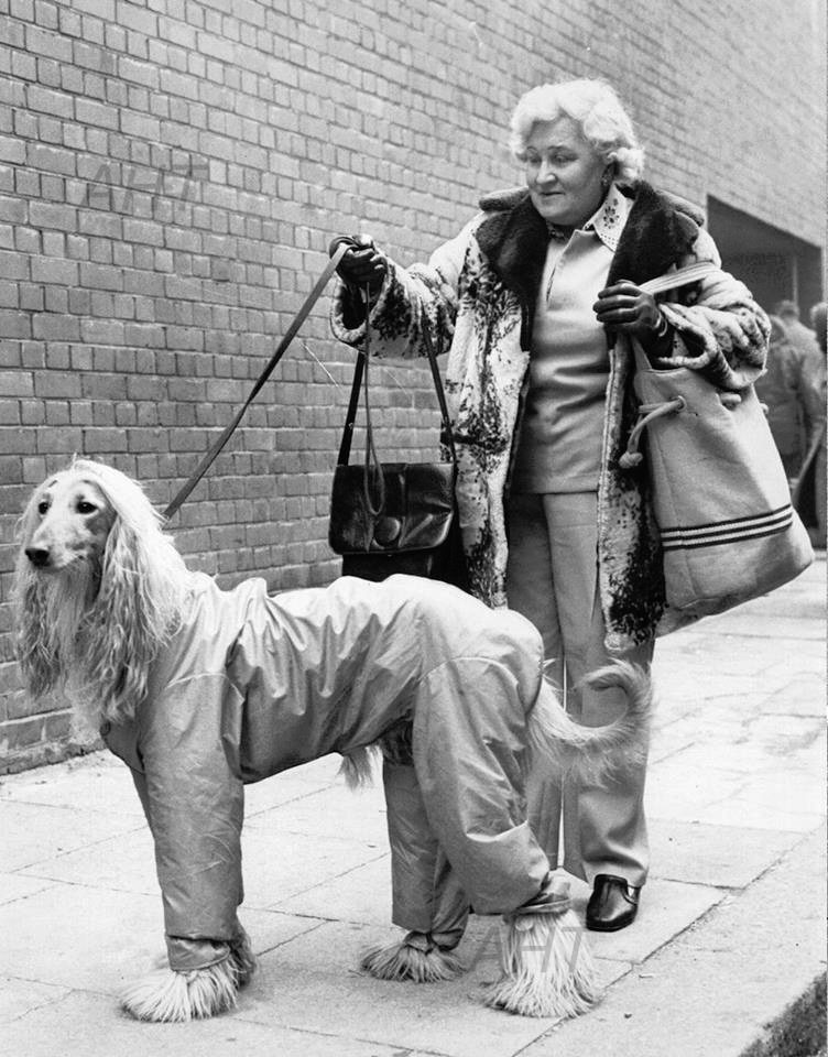 Eileen Snelling with Khorrassan Socrates PHOTO Crufts 1975