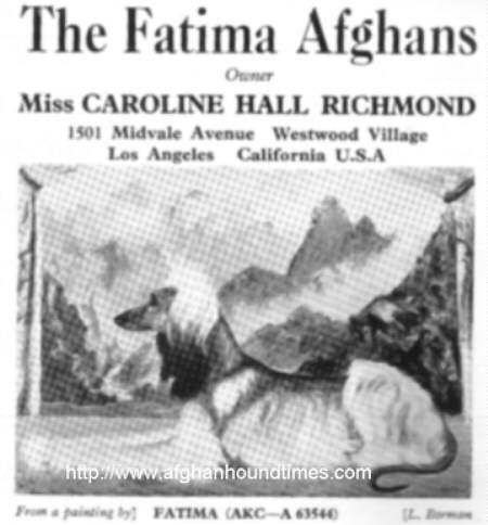 Afghan Hound Times - Fatima USA
