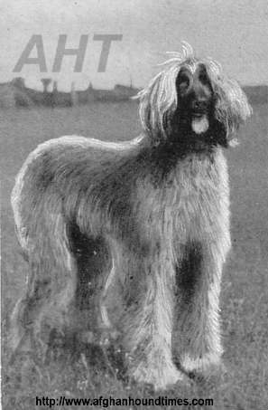 htp://www.afghanhoundtimes.com Photo Card 1930's France