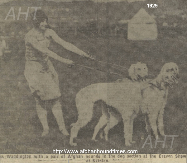 htp://www.afghanhoundtimes.com PHOTO Mary Waddington with her Frizley lineage dogs, Craven Dog Show, 1929