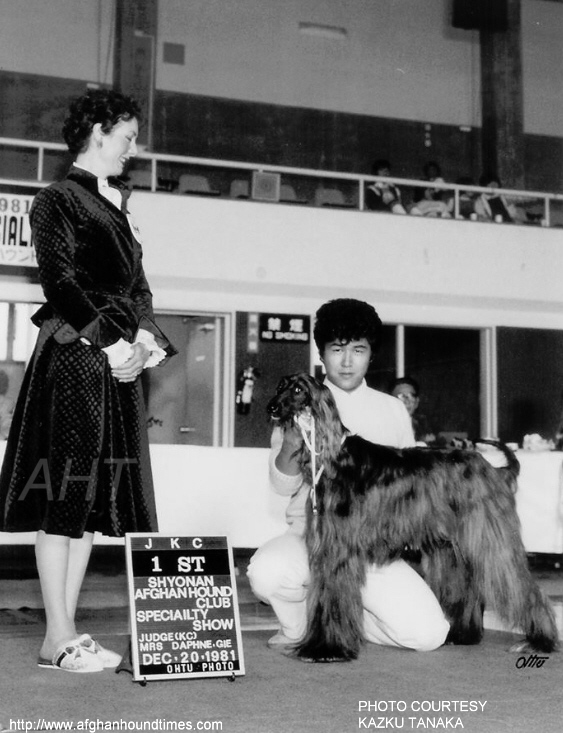 PHOTO Daphnie Gie judging Afghan hounds Japan 1981