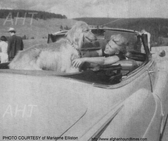 http://www.afghanhoundtimes.com PHOTO-El Mio 