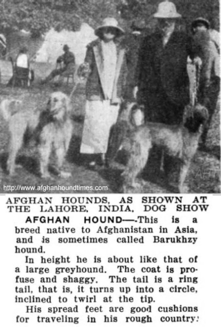 http://www.afghanhoundtimes photo Maj and Mrs Amps Lahore
