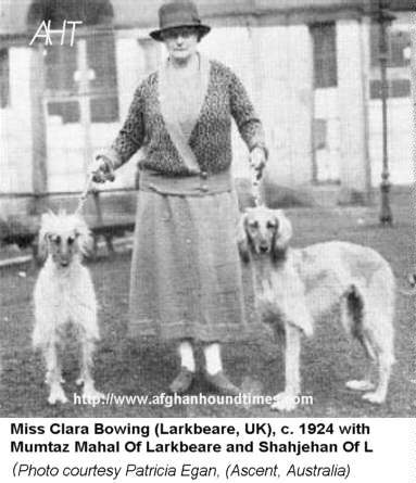 Afghan Hound Times Photo - Clara Bowring's Larkbeare (India/UK) 1924