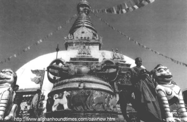 Afghan Hound Times- Photo - Afghan Hound on shrine in Nepal