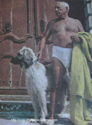 Afghan Hound Times - Piccasson with Afghan Colour Photo 1963