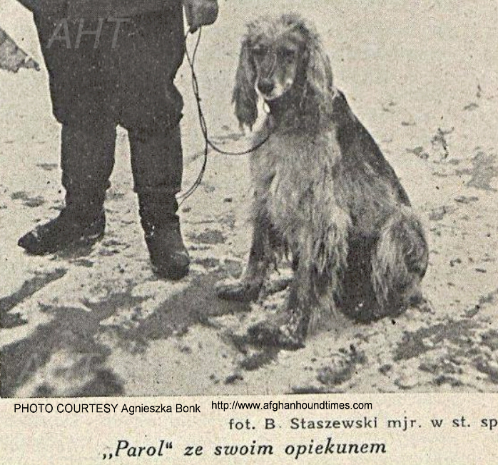 Afghan Hound Times, Breed History Poland
