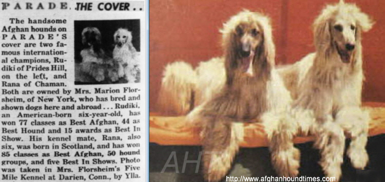http://www.afghanhoundtimes.com Photo Five Mile Cover Page PARADE magazine 1944/45