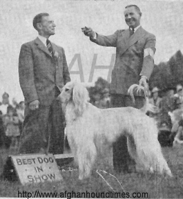 http://www.afghanhoundtimes.com   Ch Rana Of Chaman Of Royal Irish Best in Show Washington 1942