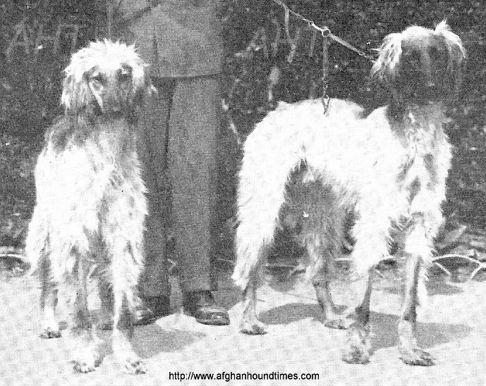 http://www.afghanhoundtimes.com PHOTO Sweden  Afghan hounds 1935