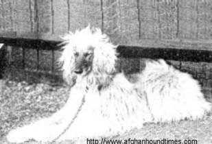 Early Afghan Hounds - Zardin 1902